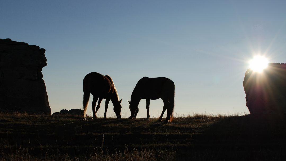 Конные прогулки у подножья горы Демерджи и знаменитой Долины Привидений - фото 3