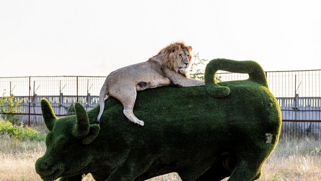 Сафари-парк львов Тайган - фото 3