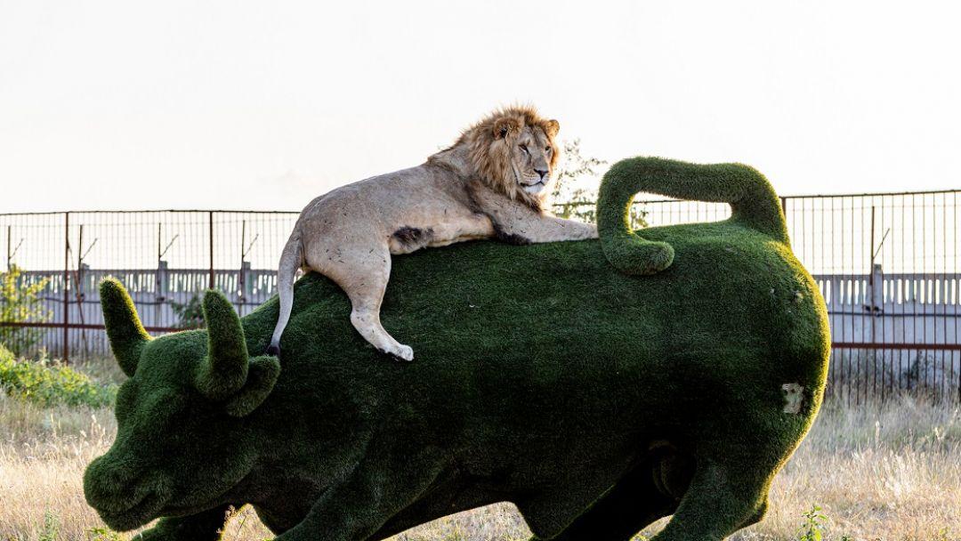 """Сафари-парк """"Тайган"""" - фото 3"""