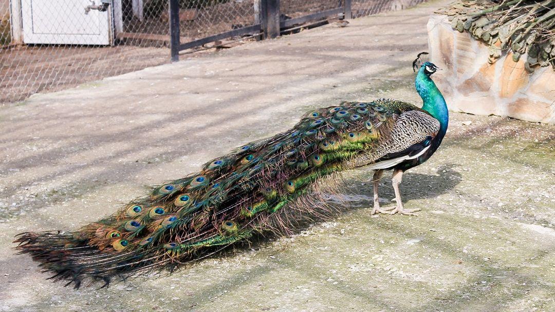 В мире животных в Алупке