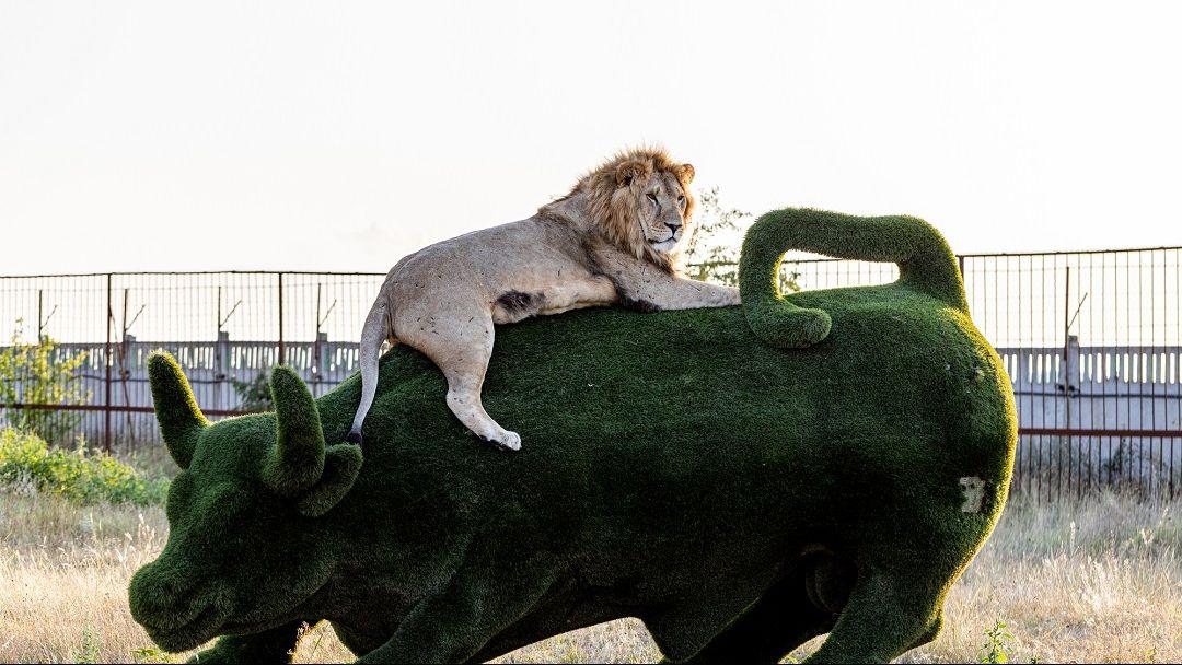 Парк львов -«Тайган» - фото 6