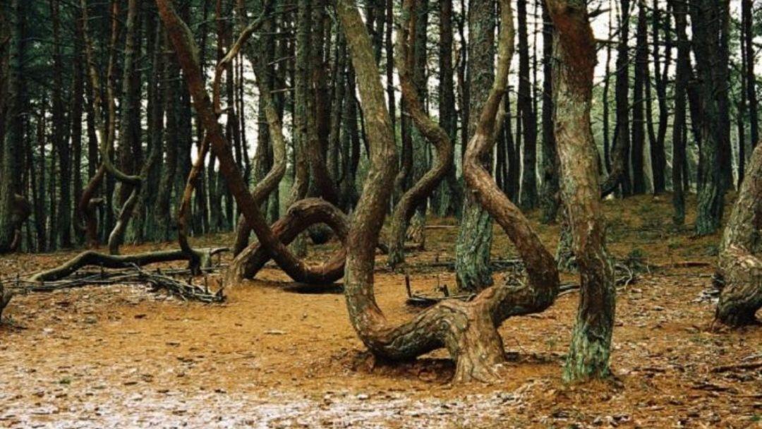 «Уникальное творение природы и человека»  НП «Куршская Коса» - фото 4