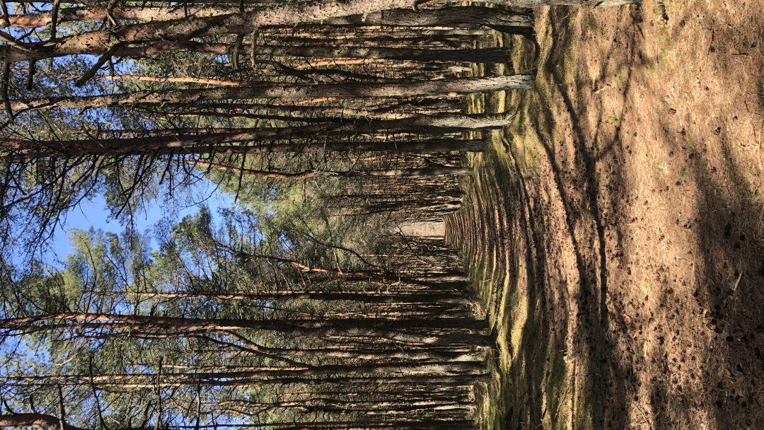 «Уникальное творение природы и человека»  НП «Куршская Коса» - фото 5