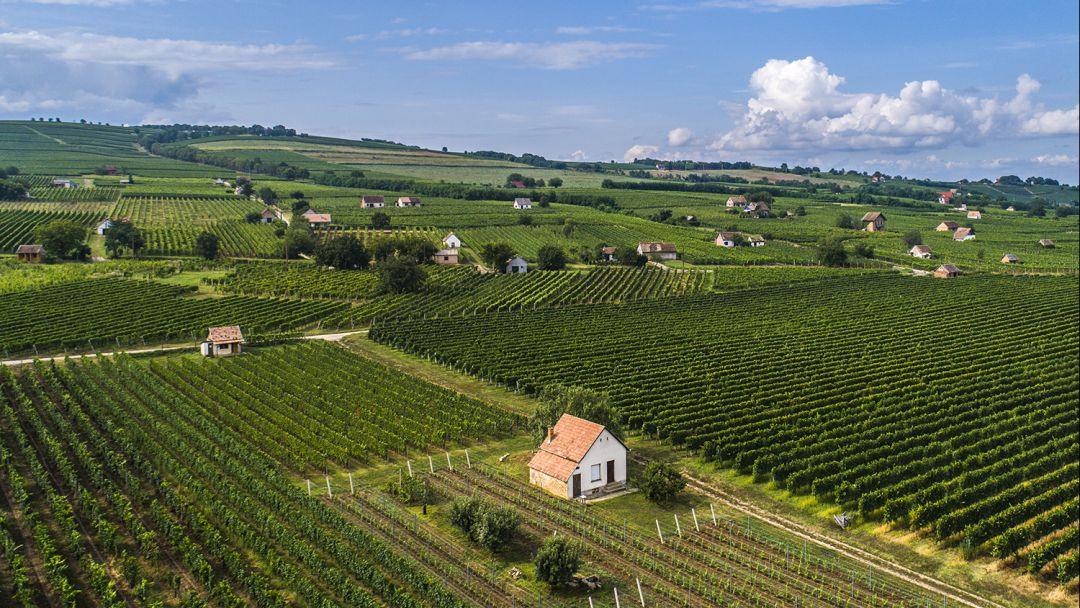 Многоликий Печ и элитные вина Виллани - фото 12