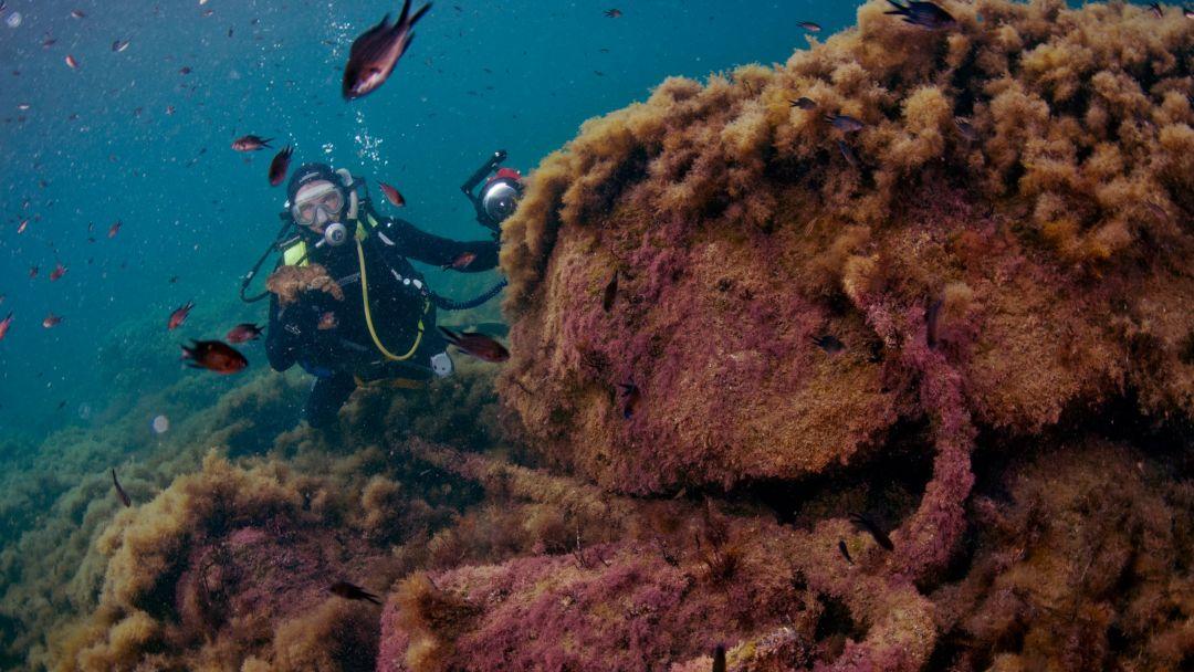 Пробное погружение с аквалангом в Ореанде и Гаспре в Гаспре
