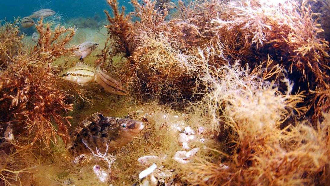 Пробное погружение с аквалангом в Ореанде и Гаспре - фото 2
