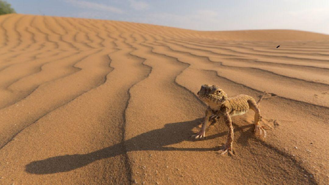 Астраханская пустыня и бархан Большой брат - фото 2
