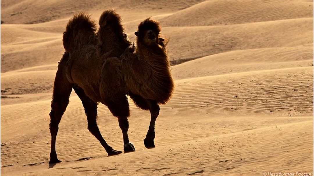 Астраханская пустыня и бархан Большой брат