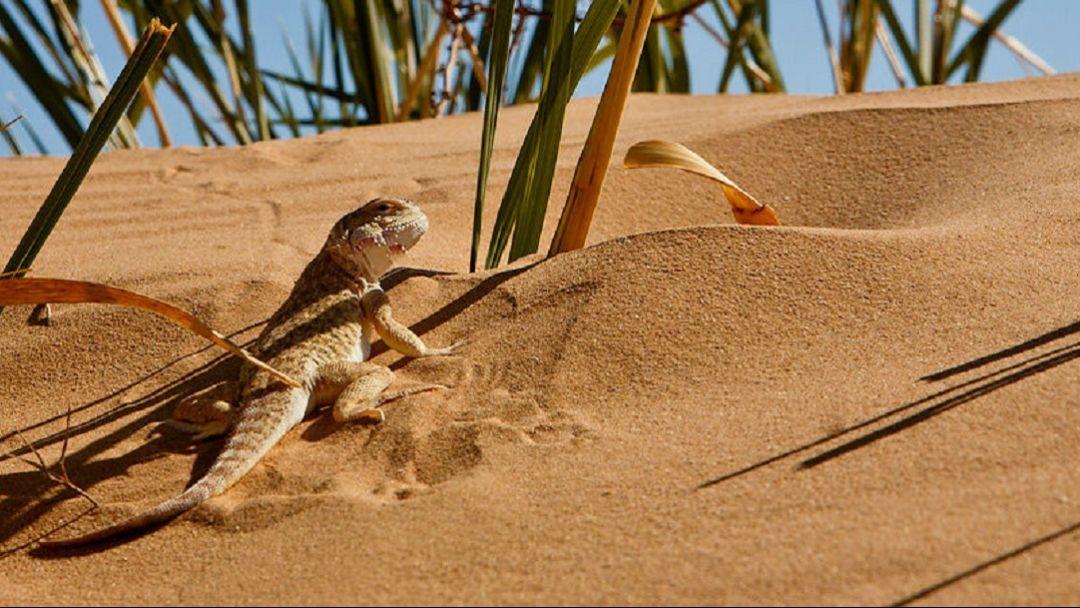 Астраханская пустыня и бархан Большой брат - фото 3