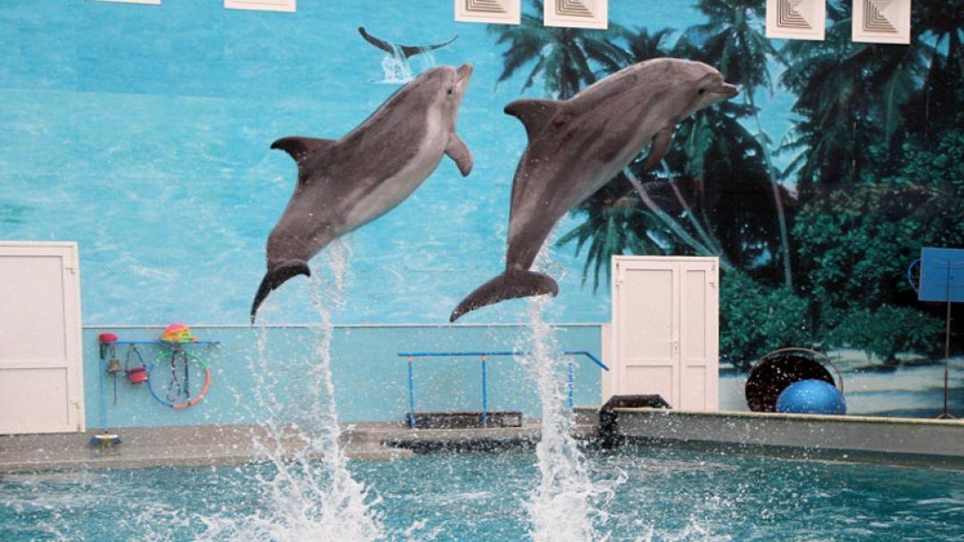 Дельфинарий и страусиная ферма - фото 4